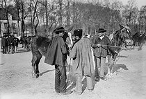 Roger-Viollet | 411019 | Horse dealer | © Maurice-Louis Branger / Roger-Viollet