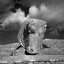 Roger-Viollet | 424936 | Head of a bull from a capital of the palace of Darius I the Great (522-486 BC). Persepolis (Iran), January 1958. Photograph by Hélène Roger-Viollet (1901-1985) and Jean Fischer (1904-1985). | © Hélène Roger-Viollet & Jean Fischer / Roger-Viollet