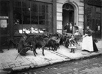 Roger-Viollet | 436108 | Goatherd selling the milk of his goats. Paris, 1911. | © Jacques Boyer / Roger-Viollet