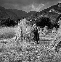Roger-Viollet | 488377 | Harvest. La Bolline (Alpes-Maritimes), July 1957. | © Roger-Viollet / Roger-Viollet