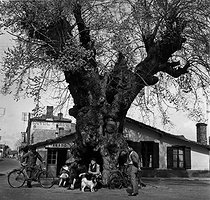 Roger-Viollet | 502346 | People meeting under an old tree in a village in the Landes area, 1955. Photograph by Janine Niepce (1921-2007). | © Janine Niepce / Roger-Viollet