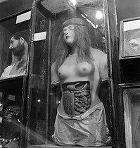 Roger-Viollet | 534215 | Musée Dupuytren, museum of wax anatomical items and specimens. Wax figure presenting female organs. Paris (Vth arrondissement), rue de l'Ecole-de-Médecine. | © Gaston Paris / Roger-Viollet