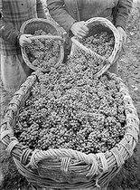 Roger-Viollet | 539457 | LA FRANCE TRAVAILLE. WINE GROWERS | © François Kollar / Bibliothèque Forney / Roger-Viollet