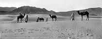 Roger-Viollet | 568035 | Meharas in the Sahara desert. Algeria, around 1900. | © Léon & Lévy / Roger-Viollet