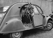Roger-Viollet | 568173 | Donkey in a Citroën 2 CV. | © Roger-Viollet / Roger-Viollet