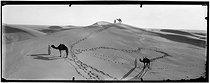 Roger-Viollet | 582192 | Mehara dromedaries in the Sahara | © Léon & Lévy / Roger-Viollet