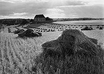 Roger-Viollet | 589024 | Paroy, Brie (Seine-et-Marne), 1957. Photograph by Janine Niepce (1921-2007). | © Janine Niepce / Roger-Viollet