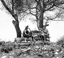 Roger-Viollet | 603212 | Picnic, 1954. | © Roger-Viollet / Roger-Viollet
