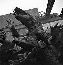 Roger-Viollet   615129   World War II. German occupation. Destruction of statues to recycle the metal. Alligators from the place de la Nation, by Georges Gardet (1863-1939). Paris, 1941.   © Pierre Jahan / Roger-Viollet