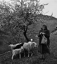 Roger-Viollet | 623225 | Shepherdess at the lambing season in the Vaucluse area, Spring 1957. Photograph by Janine Niepce (1921-2007). | © Janine Niepce / Roger-Viollet