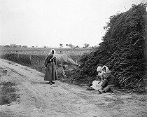 Roger-Viollet | 626136 | MUIDES-SUR-LOIRE - FARMERS | © Ernest Roger / Roger-Viollet