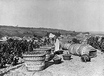 Roger-Viollet | 653263 | Vins de Champagne, les vendanges. Environs d'Epernay, 1936. | © Jacques Boyer / Roger-Viollet