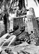 Roger-Viollet | 701141 | Outres remplies d'eau sortant d'un puits et se déversant dans des canaux d'irrigation, à Ghardaïa (Algérie). | © CAP / Roger-Viollet