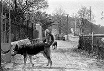 Roger-Viollet | 708787 | Louis-Ferdinand Céline (1894-1961), French writer, with his dogs. Meudon (France), 1955. | © Bernard Lipnitzki / Roger-Viollet