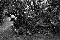 Roger-Viollet | 712568 | Public garden. Cambridge (England), around 1980. | © Jean-Pierre Couderc / Roger-Viollet