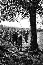 Roger-Viollet | 724531 | Children gathering some nuts. 1958. Photograph by Janine Niepce (1921-2007). | © Janine Niepce / Roger-Viollet