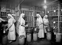 Roger-Viollet | 768593 | Centre of manufacture of the penicillin, Paris. Harvest of the culture medium by emptying the jars in metal tins ( 1946 ). | © Jacques Boyer / Roger-Viollet