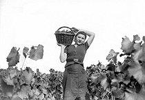 Roger-Viollet | 789951 | Grape harvest in the Champagne region (Möet et Chandon). France, 1941. | © LAPI / Roger-Viollet