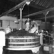 Roger-Viollet | 792073 | Caves de vin de Champagne  Moët et Chandon , pressage des raisins, Epernay (Marne), 1953. | © LAPI / Roger-Viollet