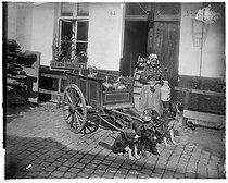 Roger-Viollet | 794889 |  Laitière Flamande . Belgique, vers 1900. | © Neurdein frères / Roger-Viollet