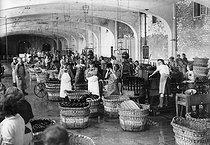 Roger-Viollet | 800231 | Nettoyage des bouteilles de Champagne  Moët et Chandon , Epernay (Marne), 1942. | © LAPI / Roger-Viollet
