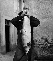 Roger-Viollet   806170   FRANCE - TRUITE DE MER   © Tony Burnand / Roger-Viollet