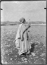Roger-Viollet | 821841 | Arab falconer. Algeria, circa 1900. | © Léon & Lévy / Roger-Viollet