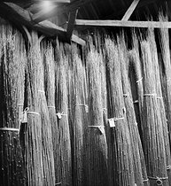 Roger-Viollet   822610   Fabrication de cannes à pêche. Stock de bambous. Amboise (Indre-et-Loire), établissements Pezon et Michel, vers 1945.   © Tony Burnand / Roger-Viollet