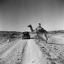 Roger-Viollet | 835647 | To the south of Wadi Halfa. Sudan (Africa). 1955. | © Roger-Viollet / Roger-Viollet