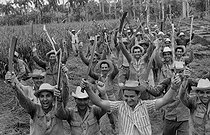 Roger-Viollet | 844100 | Farm workers in a field of sugar cane. Cuba, 1960. | © Gilberto Ante / Roger-Viollet