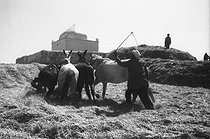 Roger-Viollet | 874504 | Algerian War of Independence. The French Army's fort at M'Zaourat, Mascara Area.The local people harvesting the wheat. Algeria, Summer 1961. | © Jean-Pierre Laffont / Roger-Viollet