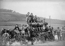 Roger-Viollet | 880247 | Grape harvest in Champagne (Möet et Chandon). 1941. | © LAPI / Roger-Viollet