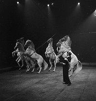 Roger-Viollet | 890289 | Circus : tamed horses. France, circa 1935. | © Gaston Paris / Roger-Viollet