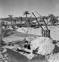 Roger-Viollet | 915073 | Irrigation avec un chadouf. Ouargla (Algérie), 1945 ?. | © Gaston Paris / Roger-Viollet