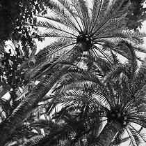 Roger-Viollet | 973810 | Gaston, Paris (1903-1964). Afrique : El Goléa et Colomb-Béchar (Algérie). négatif sur support souple en nitrate de cellulose. [s. d.]. Bibliothèque historique de la Ville de Paris. | © Gaston Paris / BHVP / Roger-Viollet