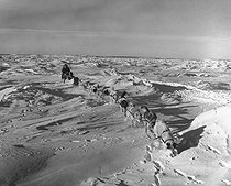 Roger-Viollet | 984033 | Sleigh pulled by dogs in Arctic Canada. | © Ray Halin / Roger-Viollet