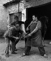Roger-Viollet | 998365 | Blacksmith shoeing a horse with his assistants. Foussignac (Charente), 1954. Photograph by Janine Niepce (1921-2007). | © Janine Niepce / Roger-Viollet