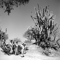 Roger-Viollet | 1003181 | Schoolboys standing on a path bordered with euphorbias. Mexico, March 1956. Photograph by Hélène Roger-Viollet (1901-1985) and Jean Fischer (1904-1985). | © Hélène Roger-Viollet & Jean Fischer / Roger-Viollet