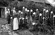 Roger-Viollet | 1016270 | Woman putting lace bonnets out to dry. Brittany (France). | © Neurdein / Roger-Viollet