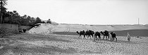 Roger-Viollet | 1032664 | Caravan in the desert of Algerian Sahara. | © Léon & Lévy / Roger-Viollet