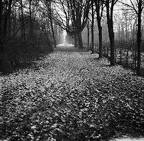 Roger-Viollet | 1064791 | Gaston, Paris (1903-1964). Paysages. négatif sur support souple en nitrate de cellulose. [s. d.]. Bibliothèque historique de la Ville de Paris. | © Gaston Paris / BHVP / Roger-Viollet