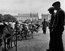 Roger-Viollet | 1068181 | Two breeders judging cattle. Photograph by Janine Niepce (1921-2007). | © Janine Niepce / Roger-Viollet