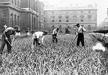 Roger-Viollet | 1087408 | World War II. Planting leeks in the Louvre gardens for the Secours National (Vichy France official charity). Paris, September 1943. | © LAPI / Roger-Viollet