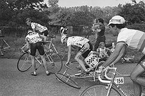Roger-Viollet | 1360230 | Tour de France 1986. 3rd stage from Levallois-Perret to Liévin, on July 6, 1986. Fall of André Chappuis (bib number 144), Gilbert Duclos-Lassalle (bib number 84), Enrique Aja (bib number 183), Erich Maechler (bib number 16) and Antonio Londoño (bib number 156). Photograph by Bernard Charlet, from the collections of the French newspaper  France-Soir . Bibliothèque historique de la Ville de Paris. | © Bernard Charlet / Fonds France-Soir / BHVP / Roger-Viollet